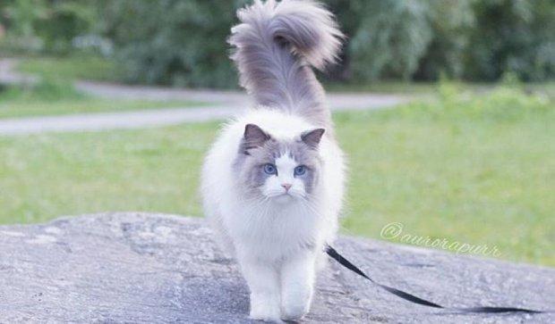 Невероятно красивая кошка поразила Instagram