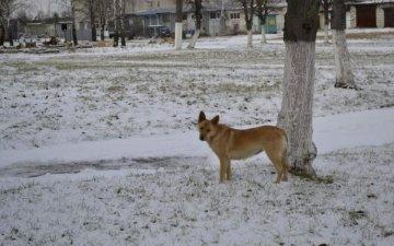 Невиданная жестокость: живодеры выбросили измученную собаку на помойку