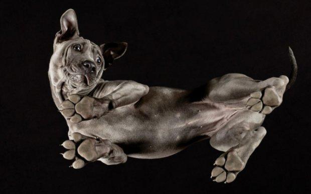 Фотограф показал собак с оригинального ракурса