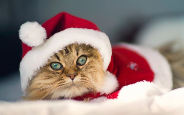 Найкращі меми на 28 грудня: жахливий російський акцент і кіт, що ховається