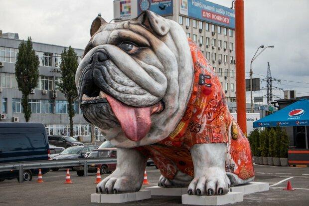 Дай лапу, Джим: у Києві біля метро з'явився гігантський бульдог, вражаючі фото