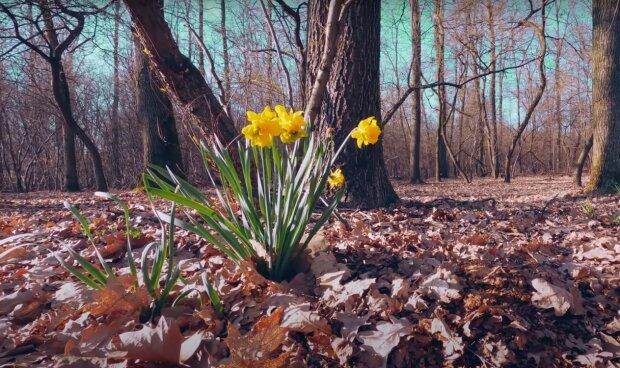весна, скриншот из видео