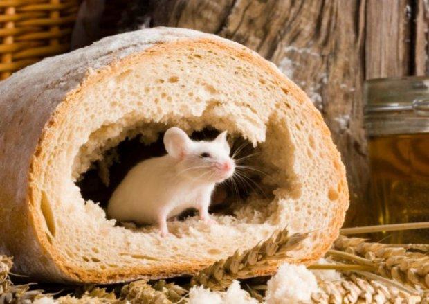 Сушимо сухарі в прямому сенсі: спочатку українцям було не по кишені м'ясо, тепер – хліб