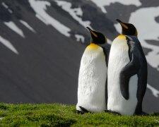 Пингвины, фото - besthqwallpapers