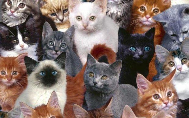Дволикість їй до лиця: химерна кішка підкорила мережу