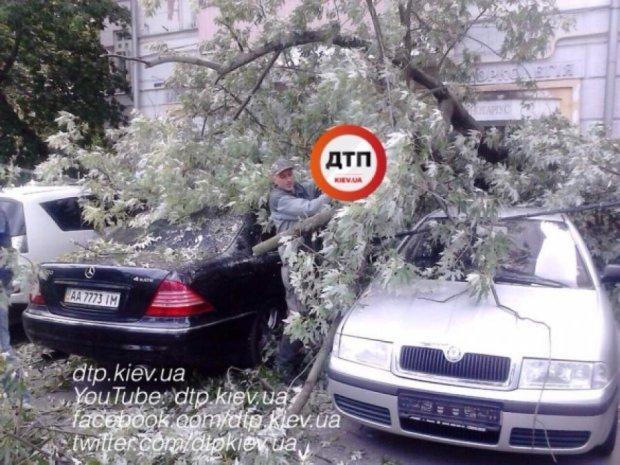 Дерево уничтожило 5 припаркованных авто в Киеве