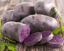 Картопля, Kudika