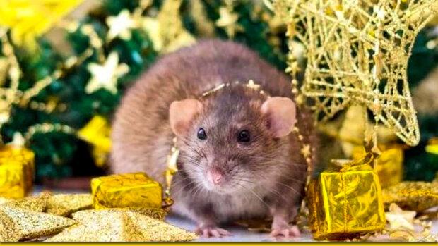 Год Белой Крысы, фото: golapravda.blog