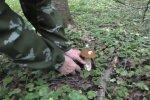 Сбор грибов, скриншот видео
