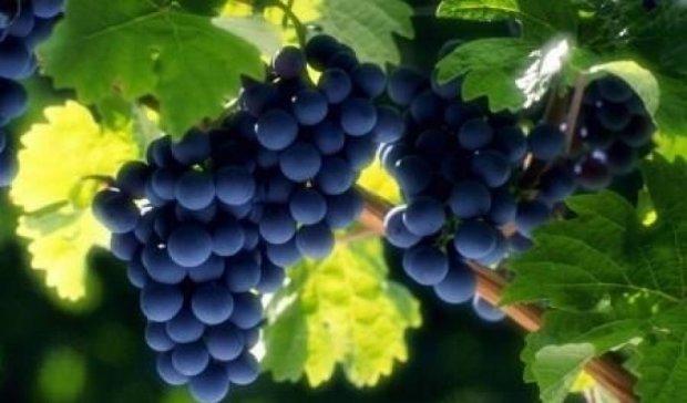 Лікарі розповіли про користь винограду