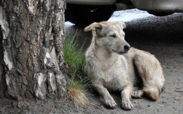 Живодеры или садисты: неизвестные жестоко поиздевались над собакой