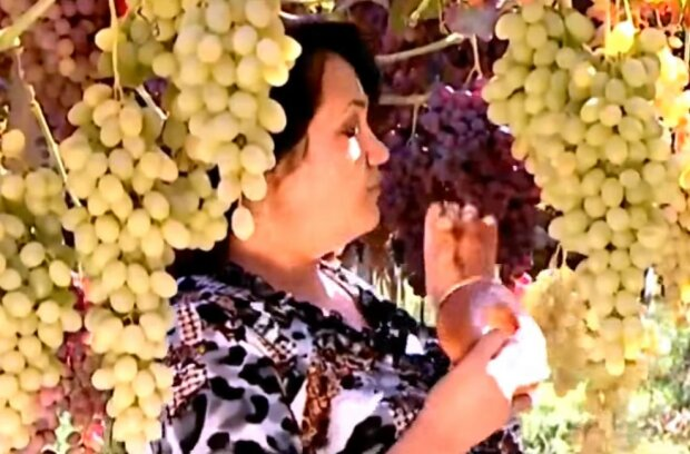 Виноградники, скриншот