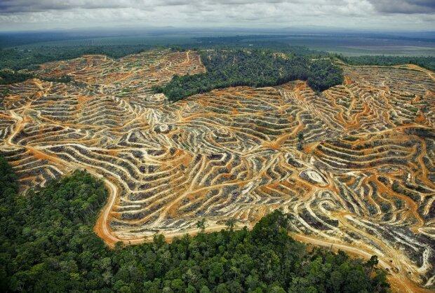 выросли темпы вырубки джунглей Амазонии, фото: news