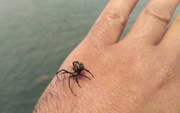 """""""Чорна вдова"""" отруїла жертву в реанімацію: павуки-вбивці атакують людей, будьте напоготові"""
