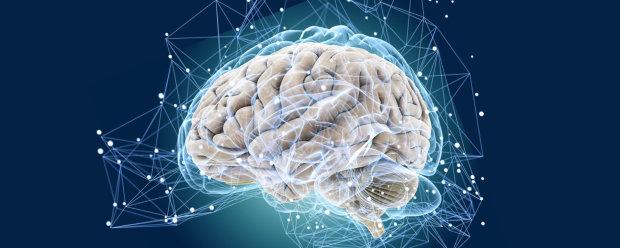 Загадки мозку: вчені показали, як народжуються думки
