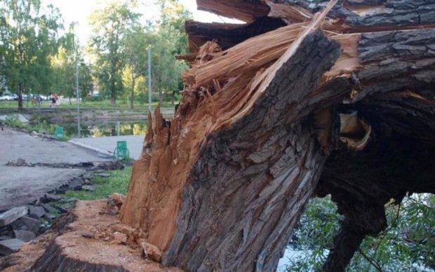 Дерево ледь не прибило киянку: фото