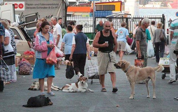 """В Одесі бійцівський пес ледь не розірвав жінку: натравив п'яний господар, копи """"не помітили"""""""