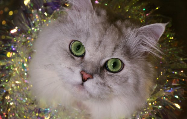 """""""Жидкий кот"""" сладко уснул в гамаке и стал звездой соцсетей: пользователи не удержались от создания фотожаб"""