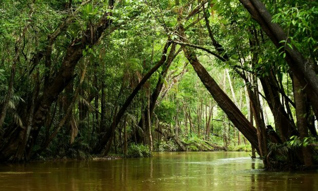 Аномалії дісталися до лісів Амазонії, вчені б'ють на сполох: скоро не буде видно неба