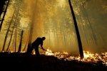 У Чорнобилі палають гектари лісу: перші подробиці