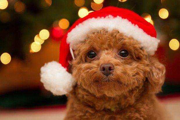 """Найкращі меми на 8 грудня: сцена з """"Короля Лева"""" та батьки, яких немає вдома"""