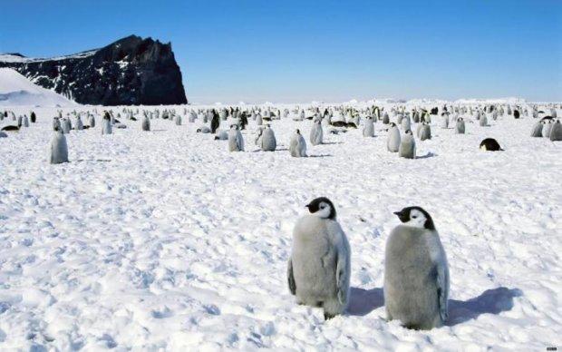 В Антарктиді будуть вирощувати найпопулярніший український овоч