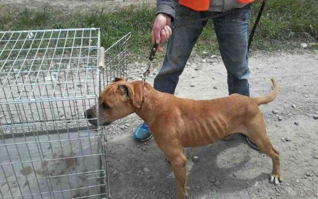 Безпритульний пес здався копам: фото