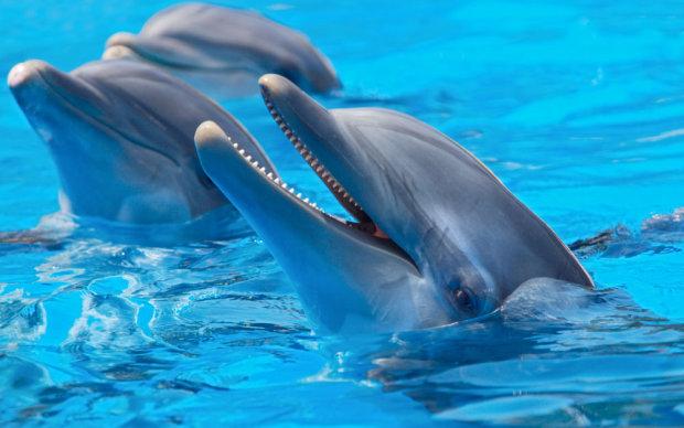 """Дельфины начали смотреть телевизор. Они в восторге от мультика """"Губка Боб Квадратные Штаны"""" и передачи """"Планета Земля"""" от BBC"""