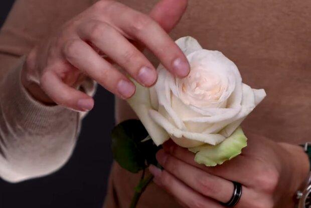 Цветы в подарок, скриншот с видео