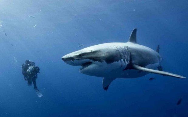 Неймовірно, але факт: вчені виявили унікальний вид акул, які вміють ходити