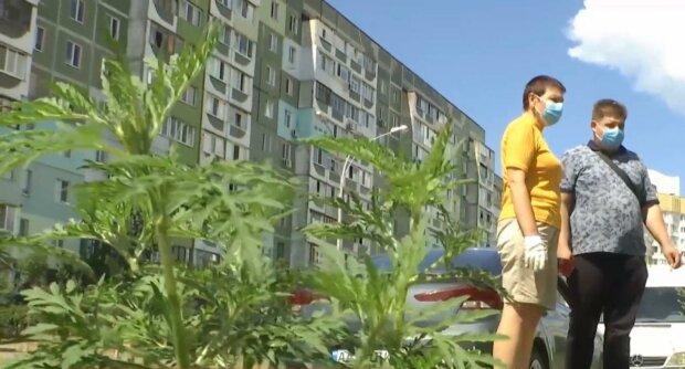 амброзия / скриншот из видео