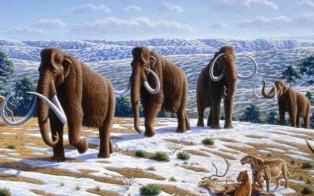 Палеонтологи розкрили таємницю вимирання мамонтів