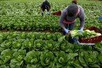 Заробітчанам на замітку: як швидко і легко отримати довідку для виїзду за кордон