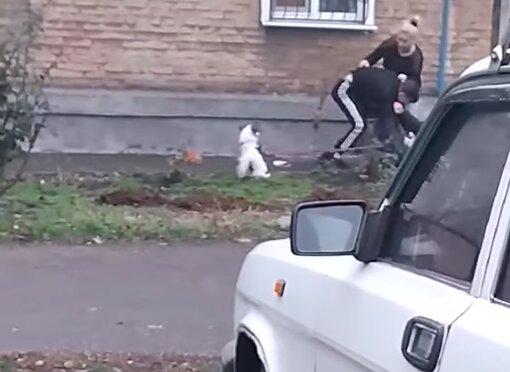 В городе Зеленского начали избивать щенков и детей