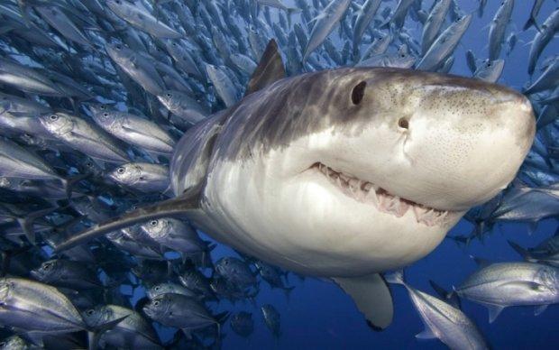 У морях і океанах закінчується риба