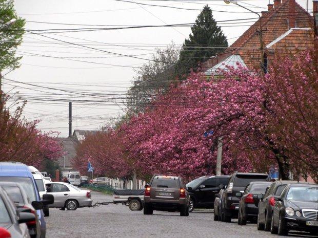 Розовая сказка: в Украине осень превратилась в весну, такой красоты вы еще не видели