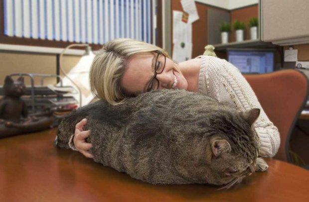 товстий котик