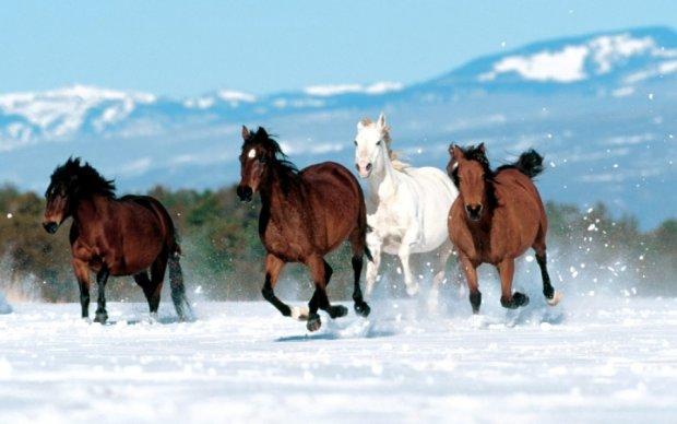 В России табун лошадей насмерть вмерз в лед - фото