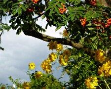 Вінниця, погода , ілюстративне фото