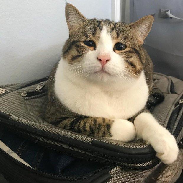 Кішка з найсумнішою мордочкою у світі довела користувачів мережі до сліз. Вона обіцяє спекти булочок, аби до неї частіше приїжджали