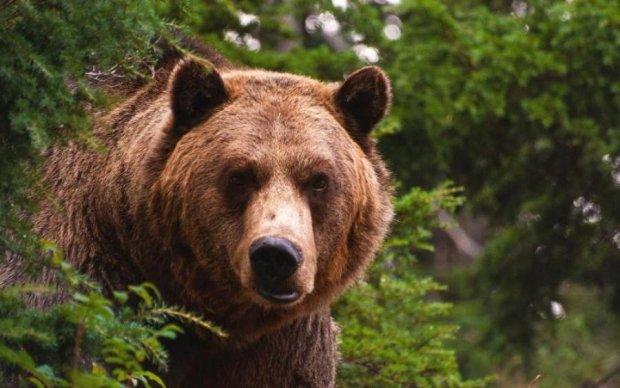 Під Києвом на дітей кинувся розлючений ведмідь