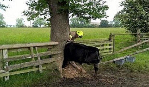 Рятувальники дві години діставали корову з дупла