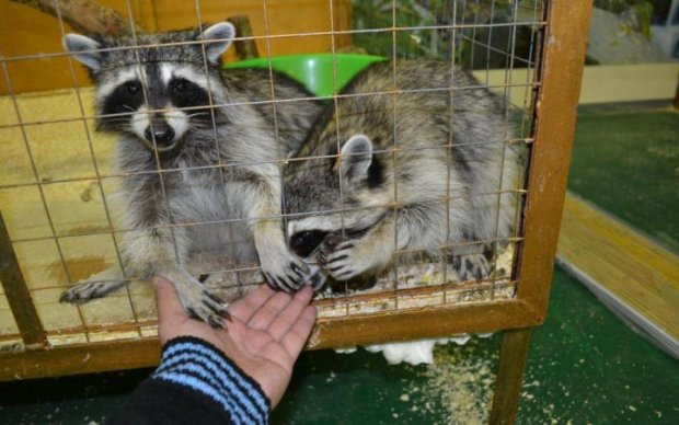 Невозможно смотреть: бессердечные бизнесмены уничтожили весь зоопарк