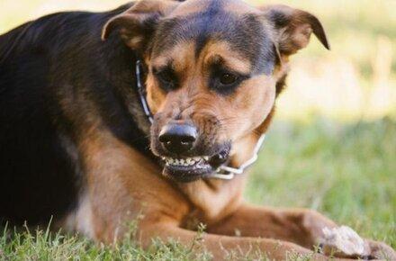 Скажені собаки: Франківщину атакував сказ, медики зробили екстрену заяву