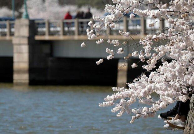 Весна, фото: Unian