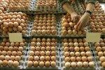 Яйця, фото з відкритих джерел