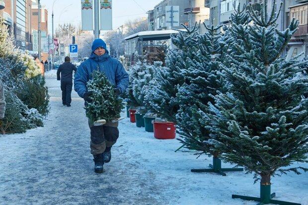 В Украине новогодние елки превратились в золото, цены взлетели выше облаков: подробности