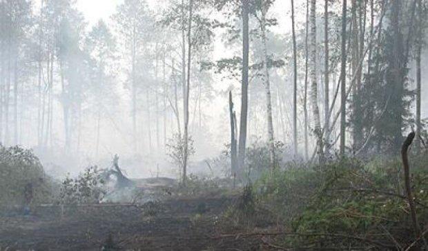 Бобри можуть зупинити пожежі на торфовищах під Києвом - екологи