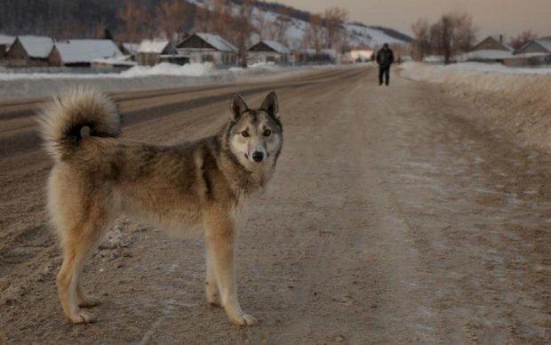 Больные подонки: в Киеве собак убивают изощренным способом
