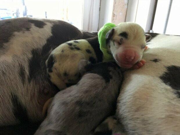 Собака-зеленка: на світ народилося унікальне цуценя кольору вічної весни, кумедні фото